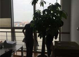上海玻璃保洁